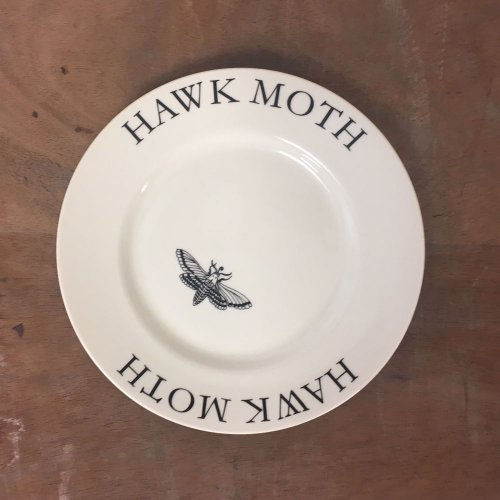 "WAREHOUSE SALE! MODERN BOTANICALS 8"" HAWK MOTH PLATE"
